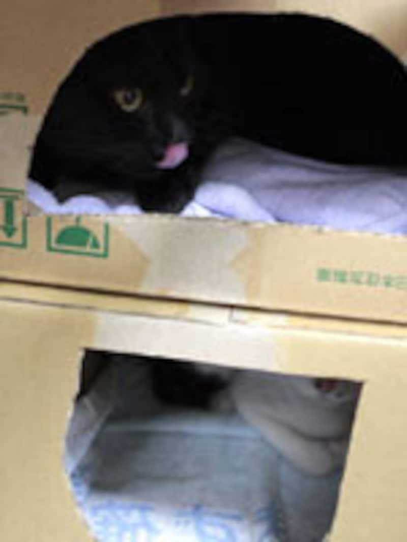 新しい環境になれるまで隠れ家が必要な猫もいます