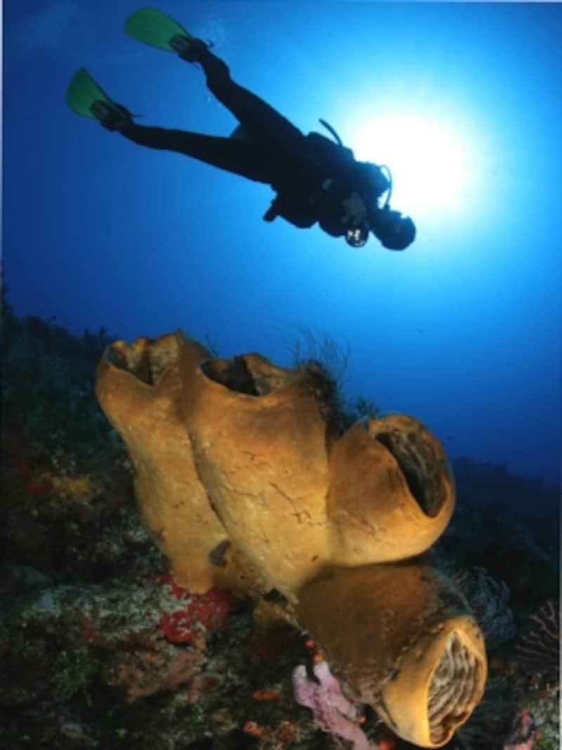 透明度の高いコスメルの海でダイビング©コスメル観光局