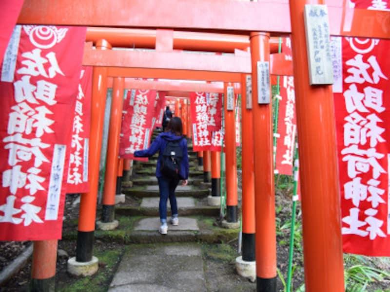 佐助稲荷神社参道の、延々と続く朱色の鳥居