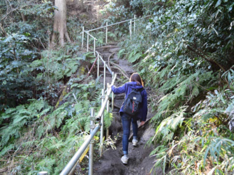 佐助稲荷神社境内からハイキングコースへと登る道は、やや険しいので注意が必要です!