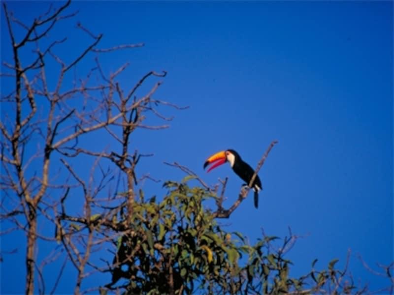 イグアス国立公園は、滝だけでなく野鳥や蝶など動植物の宝庫でもあるundefined写真提供:アルゼンチン観光局