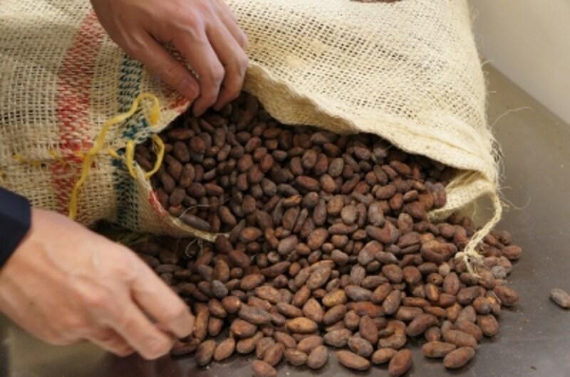 コロンビア産のカカオ豆