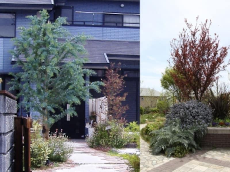 カラーリーフ植栽