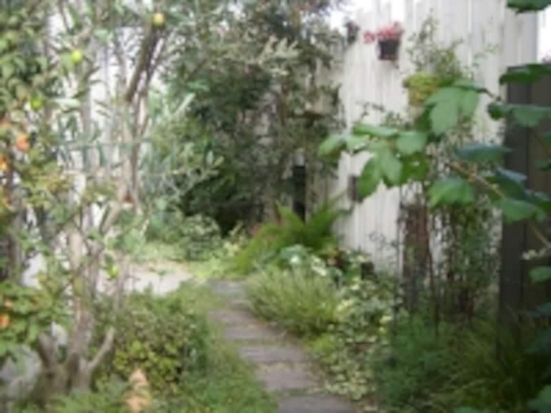 園路を彩る多種多様の植栽