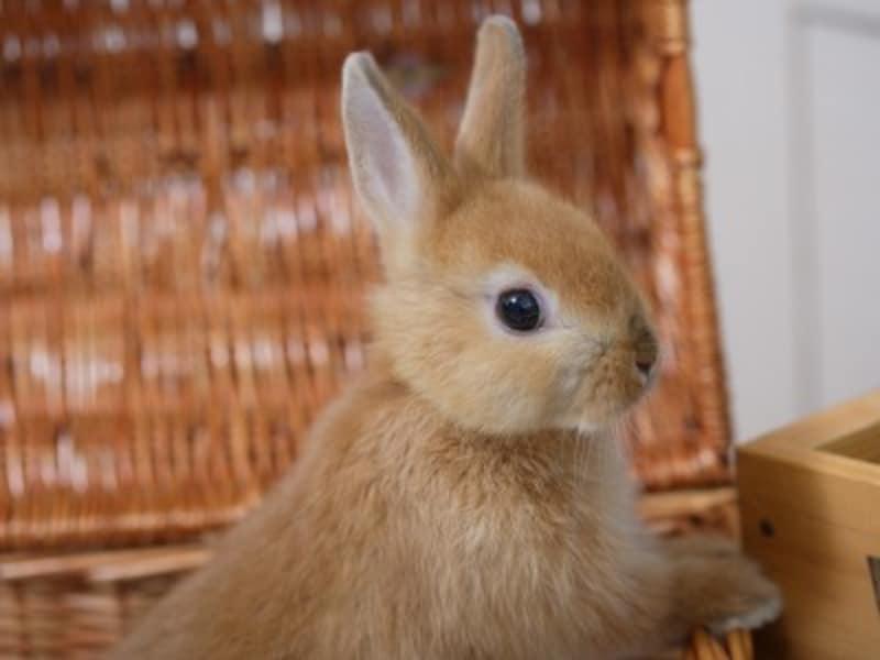ウサギがキャリーに入らない