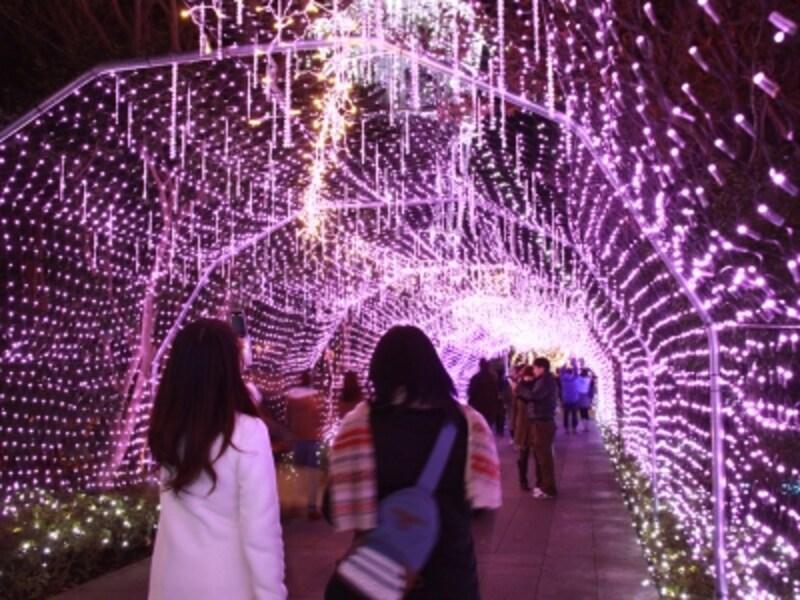 ライトアップイベント『湘南の宝石』undefined写真提供:藤沢市観光協会