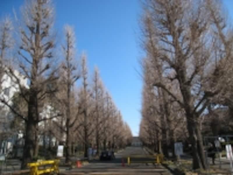 慶應日吉キャンパス