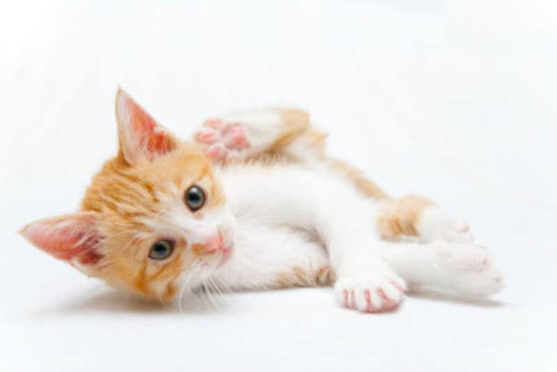 猫の分離不安症とは