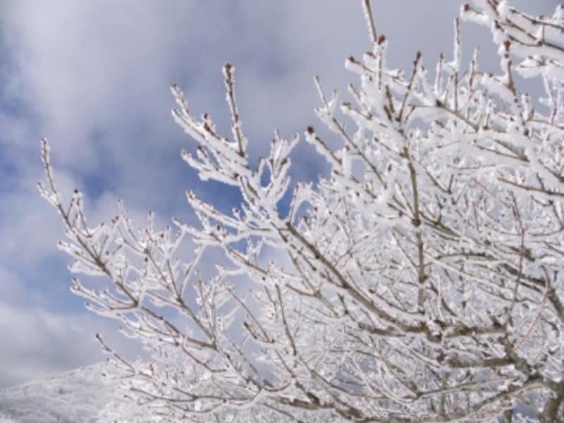 御在所岳の樹氷(2)