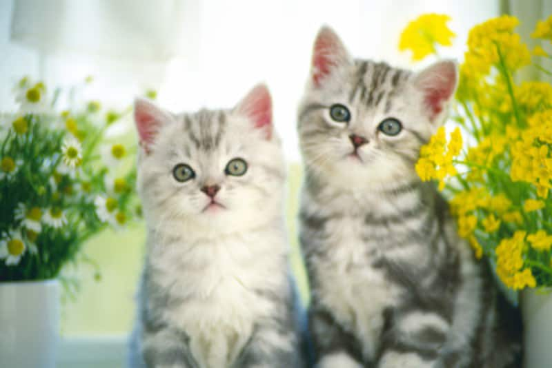 産まれたての子猫の育て方