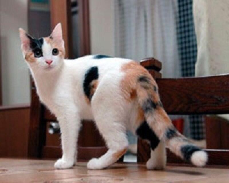子猫の離乳食