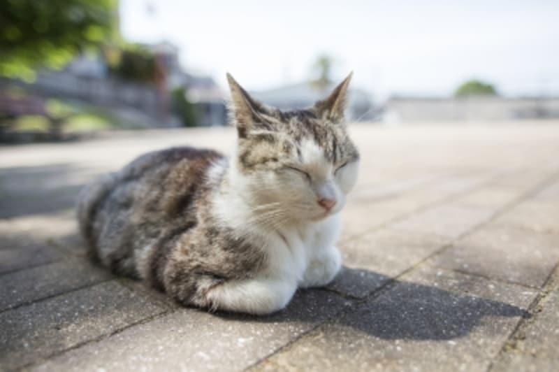 猫と車でお出かけ!ドライブや車移動の際に注意するコツ