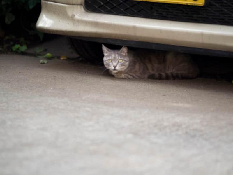 外出時の注意点は猫を逃がさないこと