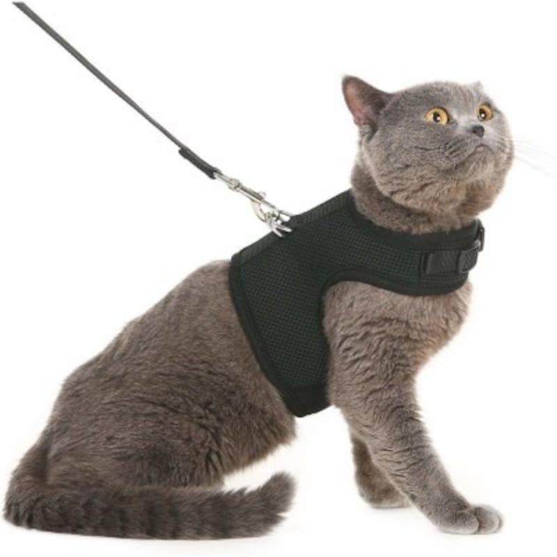 猫用のハーネスとリード/PUPTECKハーネス猫用(出典:Amazon)