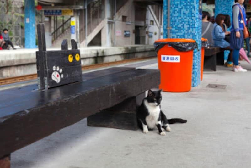 猫と一緒に公共の乗り物を利用する際の注意点