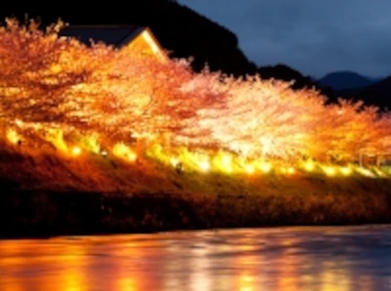 水面に映るライトアップが幻想的