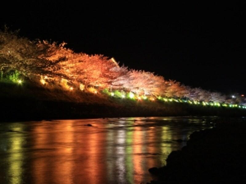 河津桜並木ライトアップ