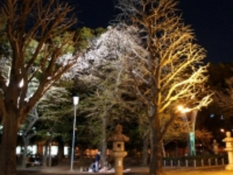 靖国神社の夜桜風景(イメージ)