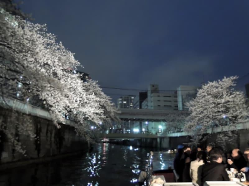 桜をライトで照らしながら進む『目黒川夜桜探検クルーズ』