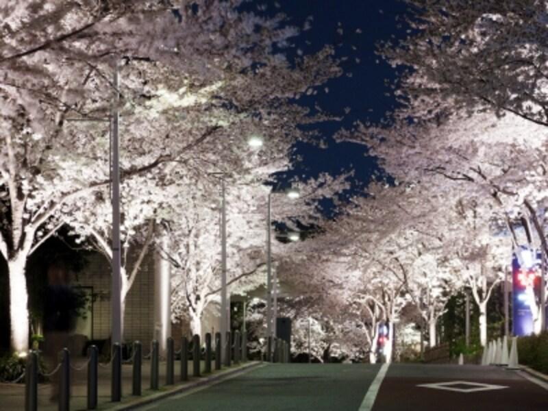 た六本木さくら坂の桜ライトアップ