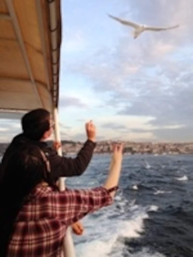 ボスポラス海峡カモメ