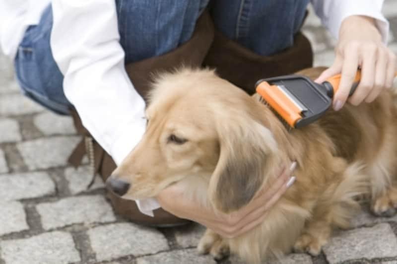 グルーミング中の犬
