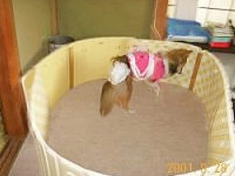 お風呂マットで作ったサークル