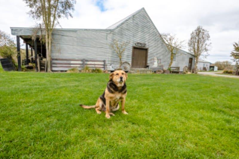 老犬介護の基本を解説