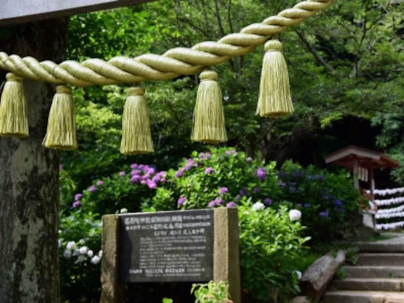 アジサイの季節の葛原岡神社