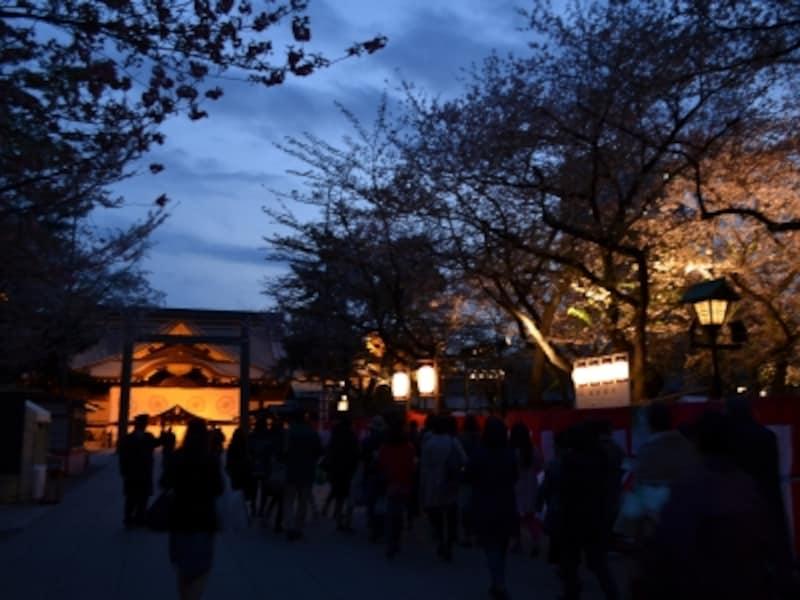 靖国神社で毎年開催される夜桜能