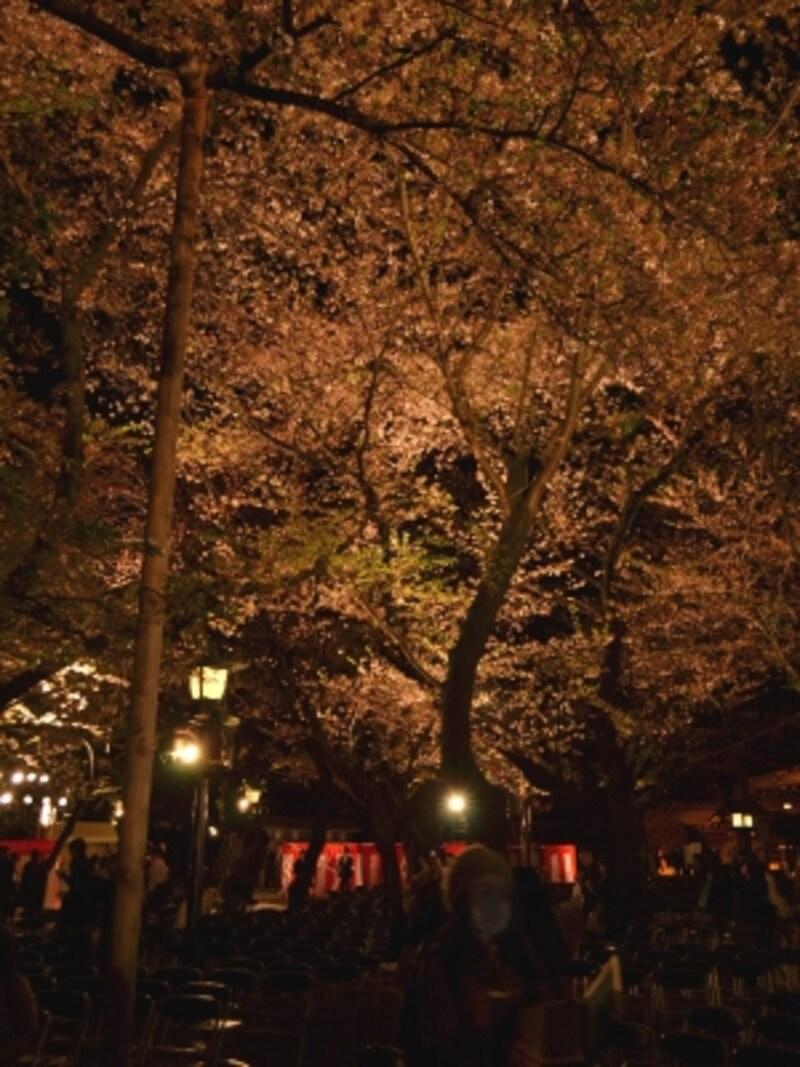 桜に覆われた観覧席