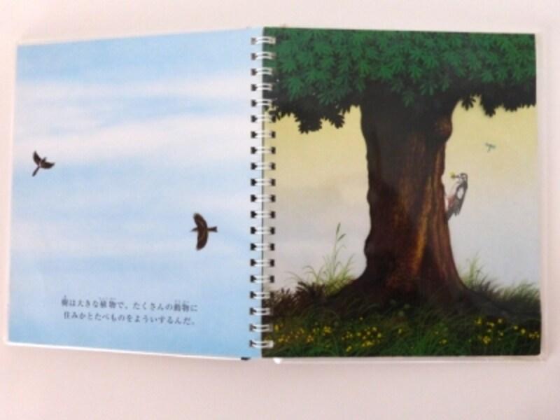 樹のページ写真1