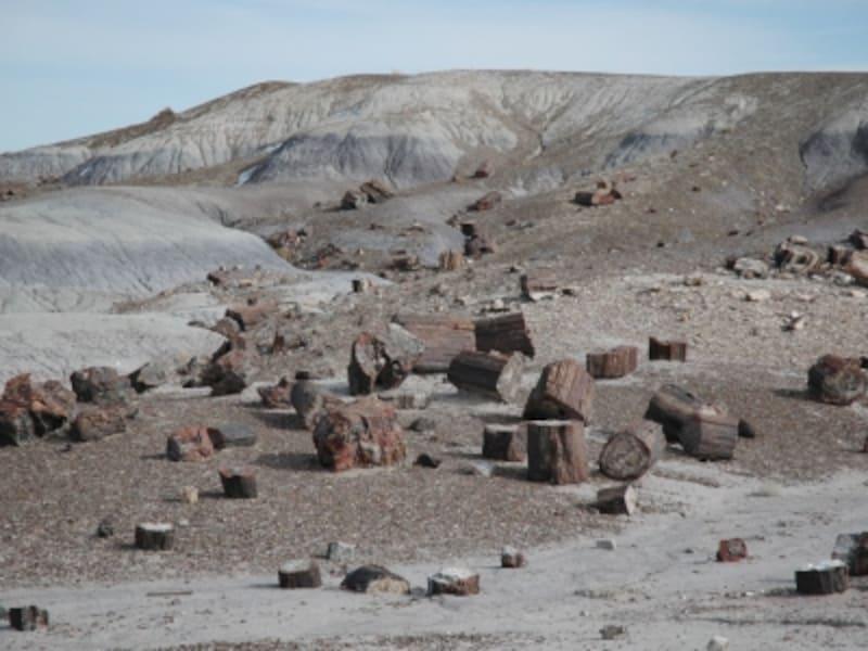 宝石になった木の化石がたくさん