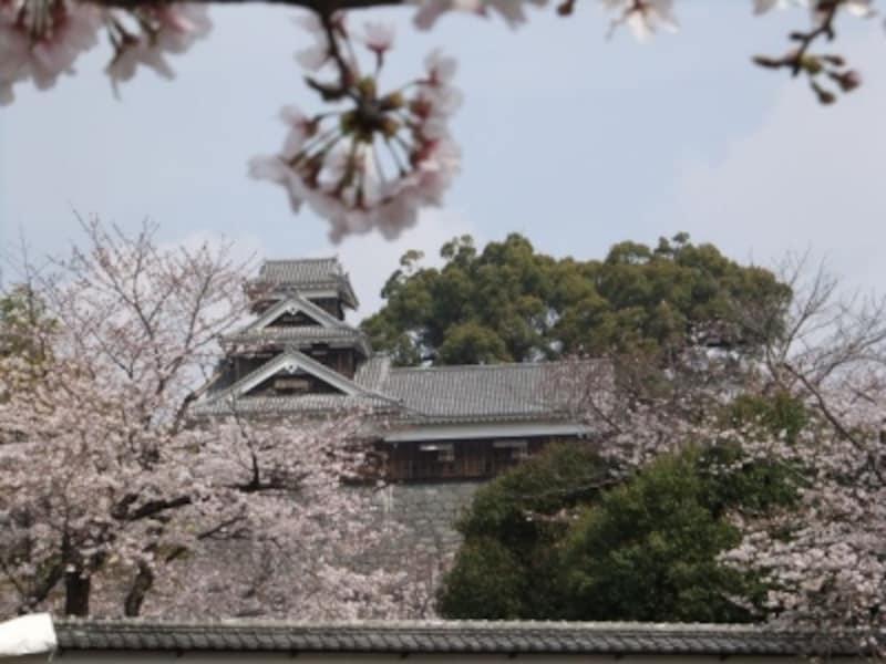 熊本城の桜(1)