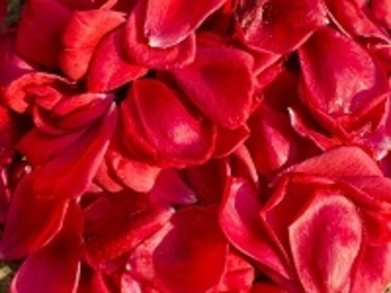 優雅や上品といったイメージを想起させるお花の香りも間違いありません