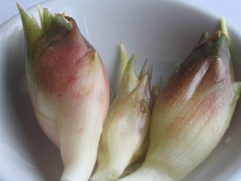 夏に独特の香りで楽しませてくれるミョウガ(みょうが・茗荷)