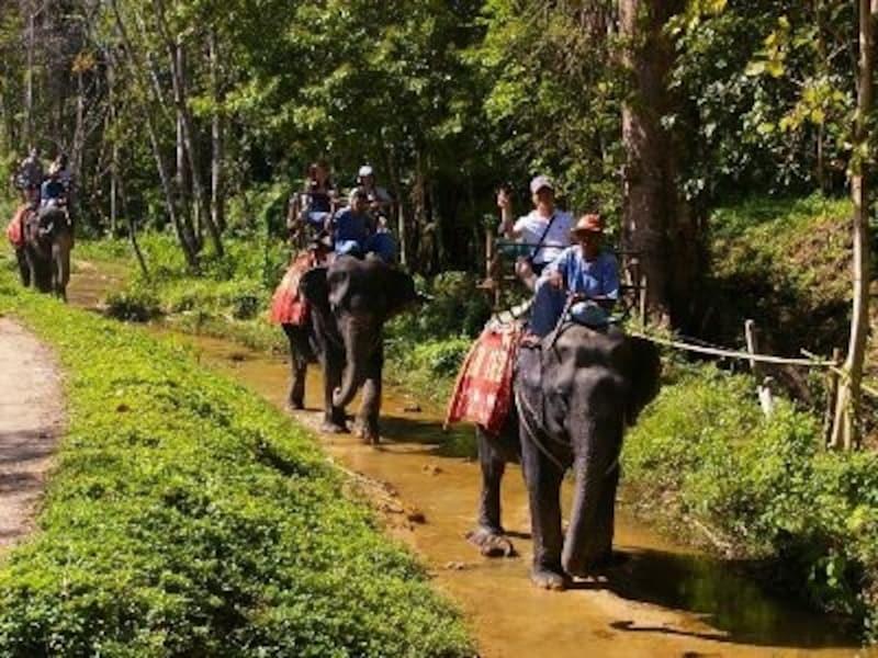 タイに来て象に乗らないのはもったいない!一度載ったら象の賢さに気づくはず