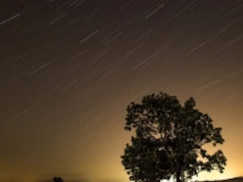 星と美瑛の木