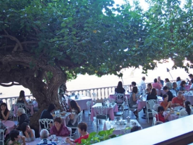 まるで緑のシャワー!樹齢250余年というハウの木陰で朝食を。店名の「ラナイ」とは、ハワイ語でベランダのこと
