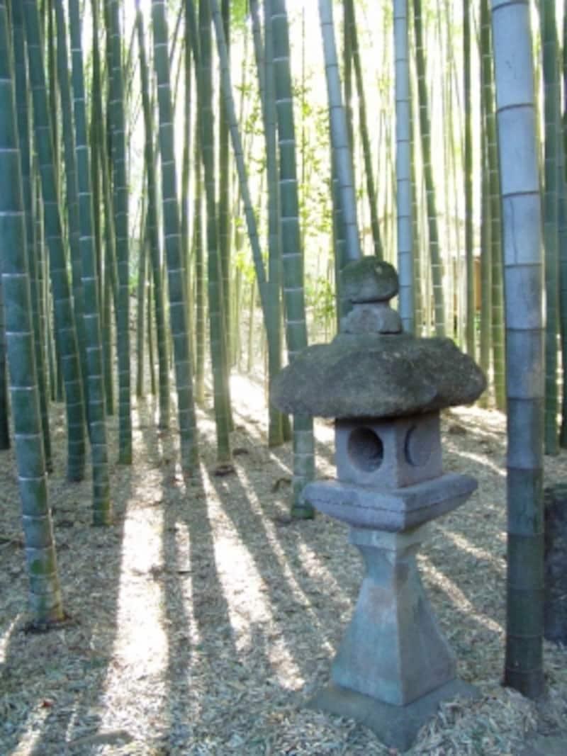 竹寺・報国寺のすがすがしい竹林