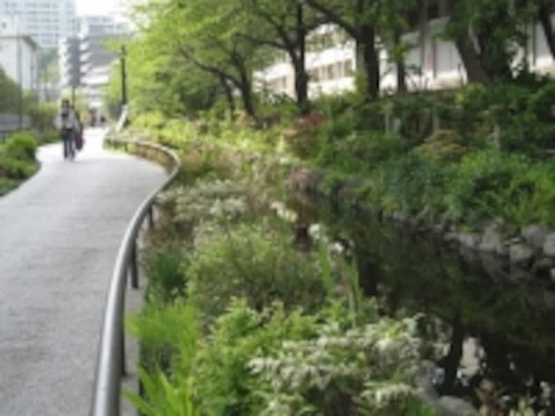 目黒川の緑道