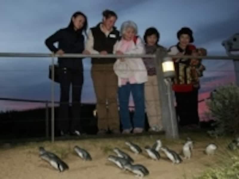 フェアリーペンギン