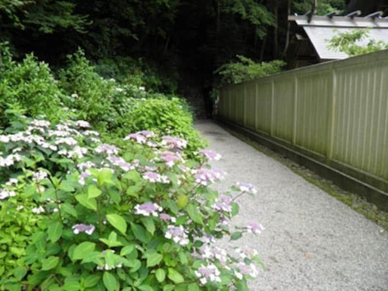 鎌倉宮の神苑山あじさい散歩道