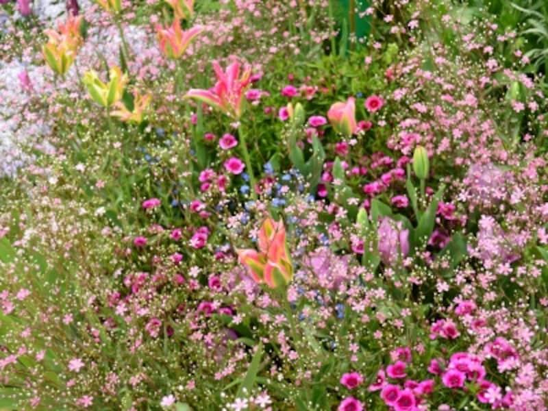 朝日の花壇