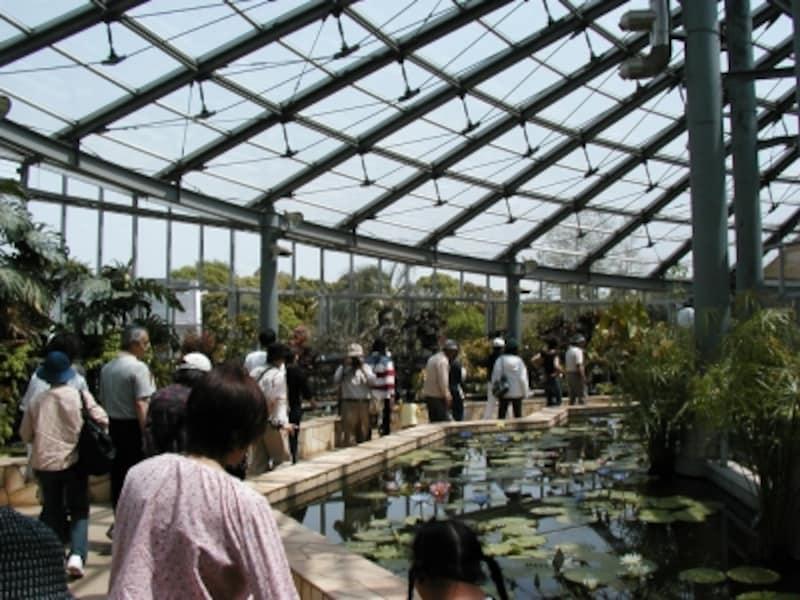 大船フラワーセンターの鑑賞温室