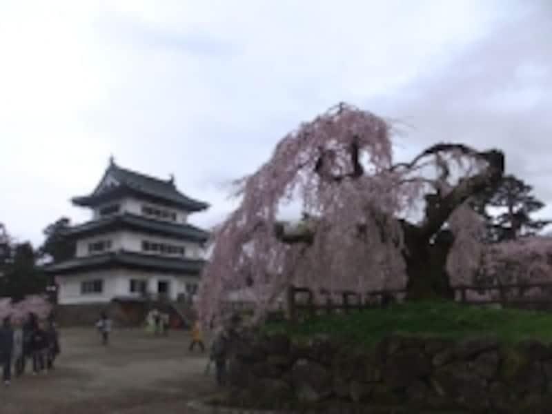 弘前城の桜(2)/本丸のしだれ桜と天守閣