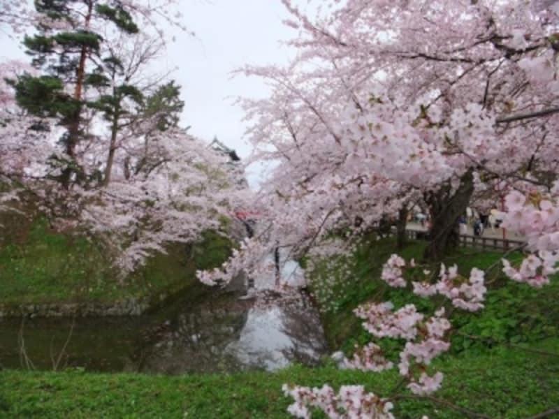 弘前城の桜(8)/天守閣と下乗橋と桜