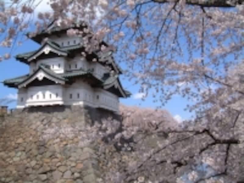 弘前城の桜(9)/下乗橋から望む天守閣と桜