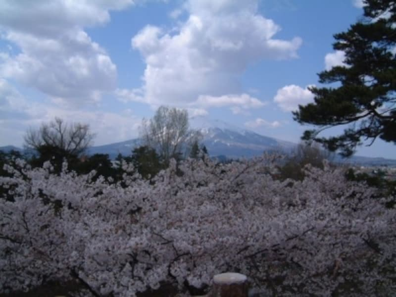 弘前城の桜(11)/津軽富士・岩木山と桜
