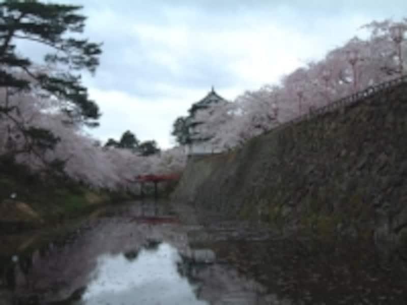 弘前城の桜(12)/北の郭から内濠越しに眺める天守閣と桜